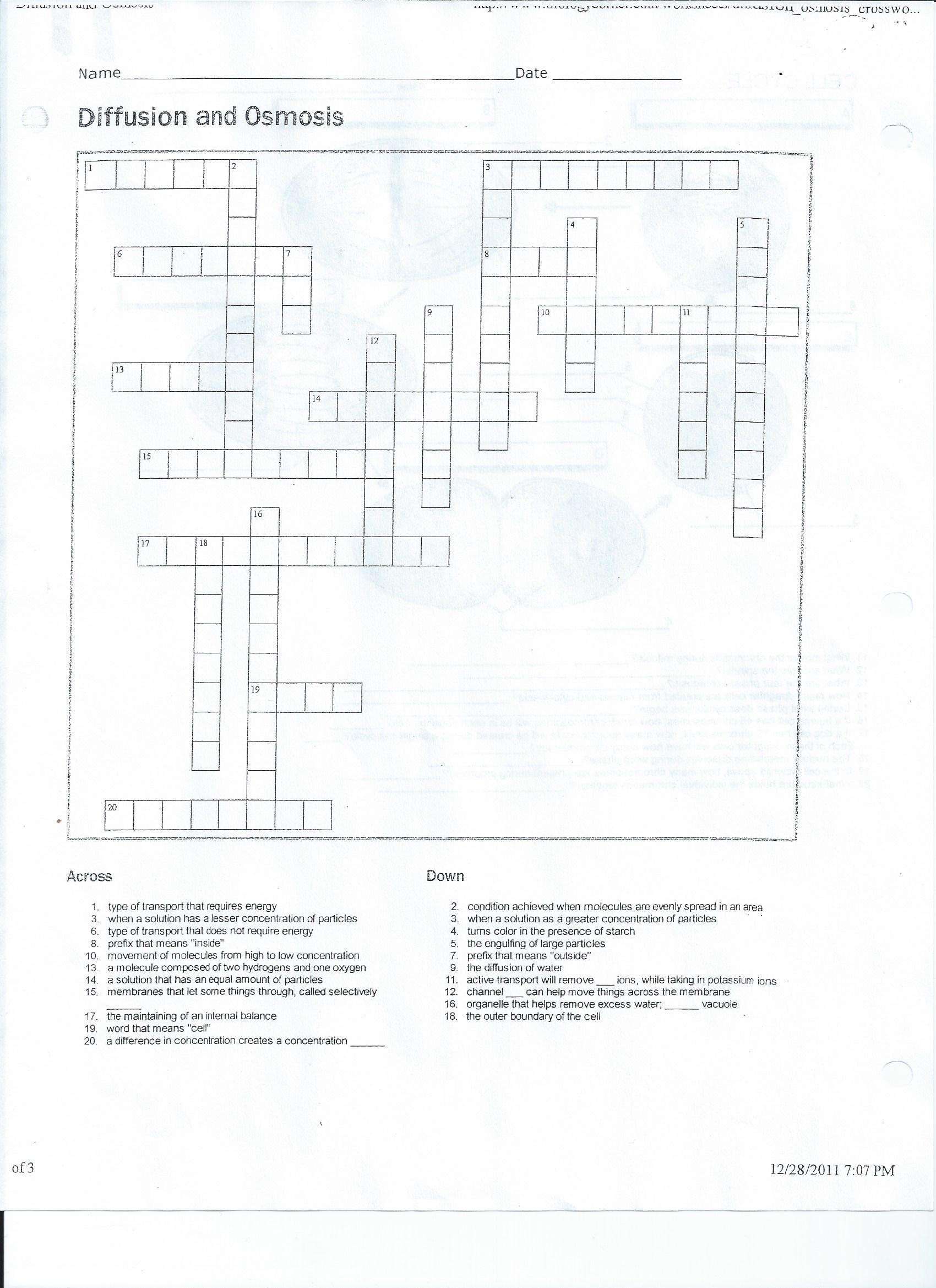 Cellular Transport Worksheet Backside