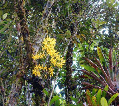Wilde Orchideen in Cajas