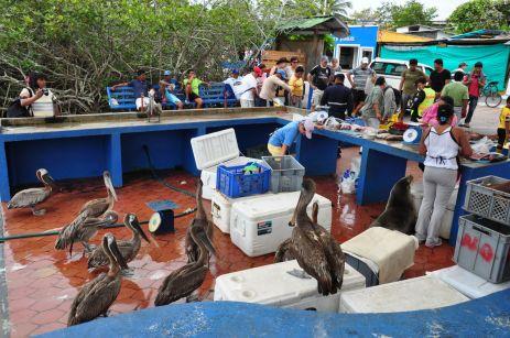 Viele potentielle Kunden auf dem Fischmarkt