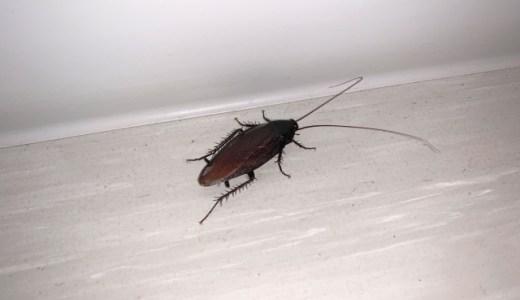 フィリピンのゴキブリは噛むしデカい!退治と予防を徹底解説!