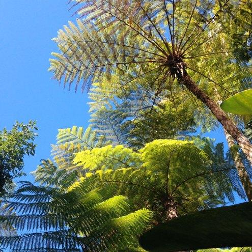 Photo du jardin de la maison Folio, île de la Réunion