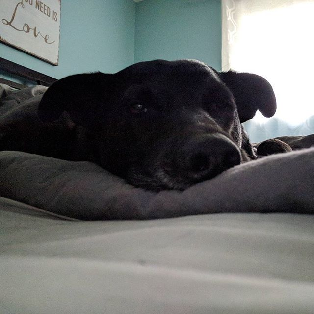 It's nice to wake up to this face again after being away for a week 🐕️#abbieandrascal #sleepydog