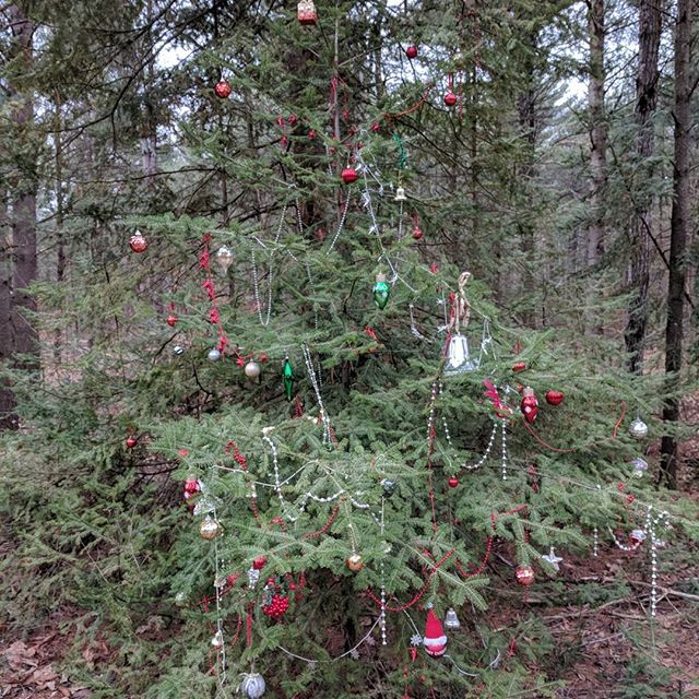 Found these trees in the middle of the forest. It's cute that someone would take the time to do this in a place that few would even notice.