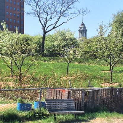 American Artist Paints Urban Community Garden. Erin McGee Ferrell LIVE Paints inner city garden through the seasons. Philadelphia-artist.com Portland, Maine