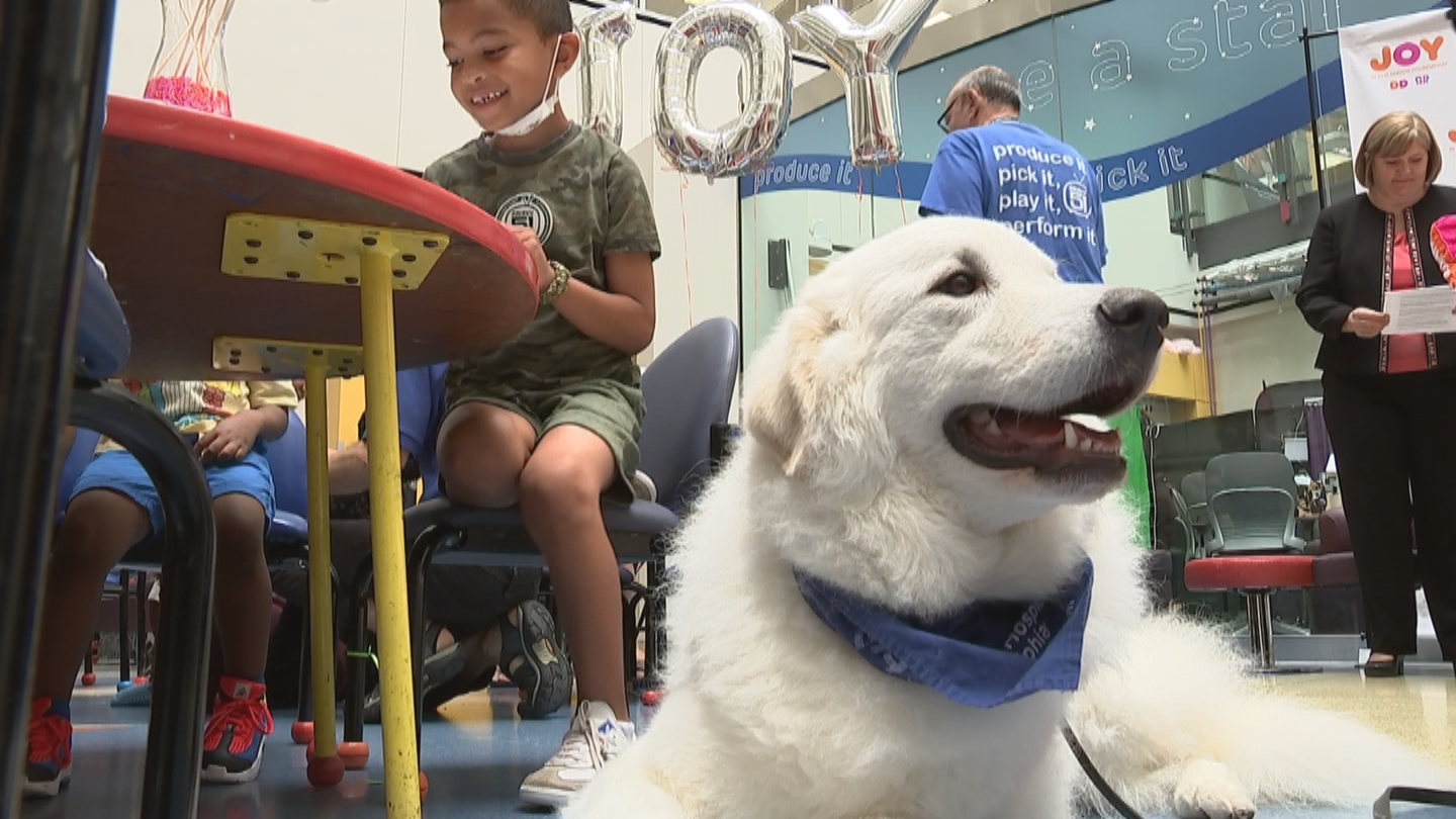 Therapy Dogs on Flipboard | El Paso, TX, National Night ...