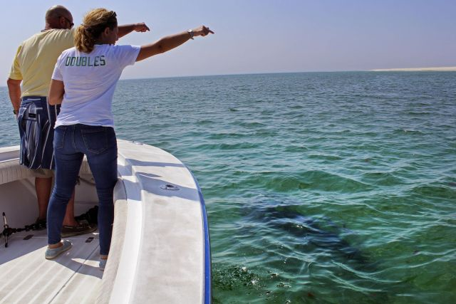 Shark tourism grows on Cape Cod, 3 years after attacks