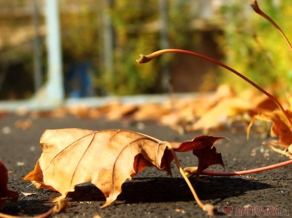 Гринпис: не трогайте опавшие листья!