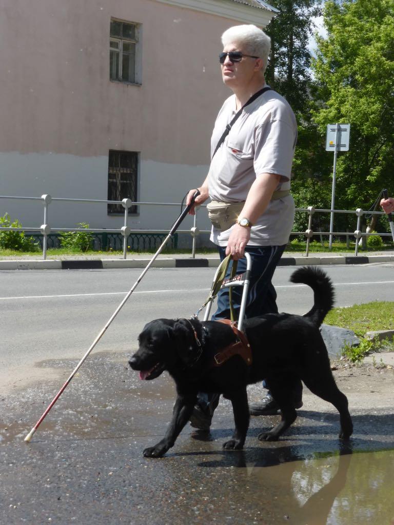 «Это мои глаза, мой помощник и друг»: добрая история собаки-поводыря, воспитавшей его семьи и нового хозяина
