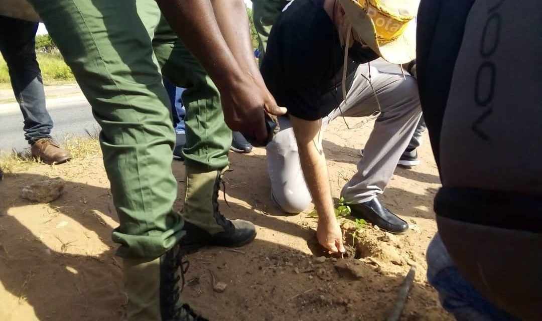 Honorary Consular Corps of Ghana plants 200 trees in support of Green Ghana Initiative