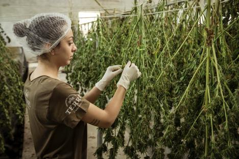 AskGrowers is a community of people working in the cannabis industry to provide trusted product advice and information. (Image credit: Unsplash)