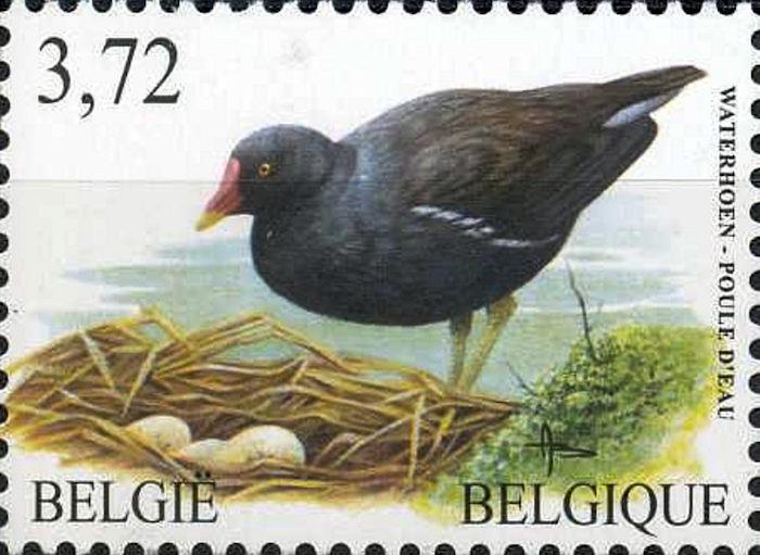 poule_belgique