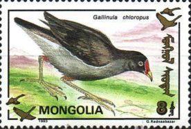 poule_mongolie
