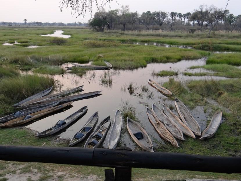 Mokoro boats at Oddballs camp Okavango Delta Moremi