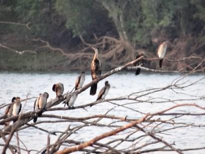 Birds on the Zambezi