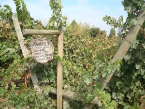 A sign of wine