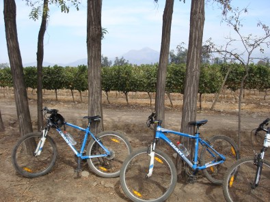 Leaving the bikes, we toured the vines