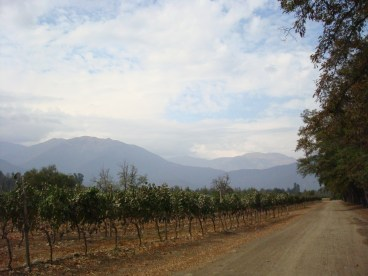 Chile winery and vineyard view