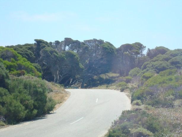 Rottenest Island WA