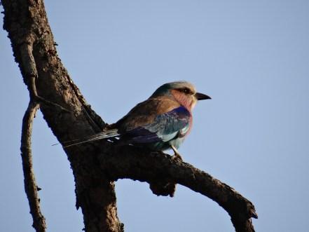 Such a pretty bird sighting on safari (i wish i knew its name)