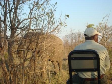 Elephant on Safari South Africa Sabi Sands