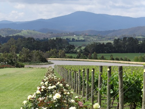 Chandon winery in Yarra Valley