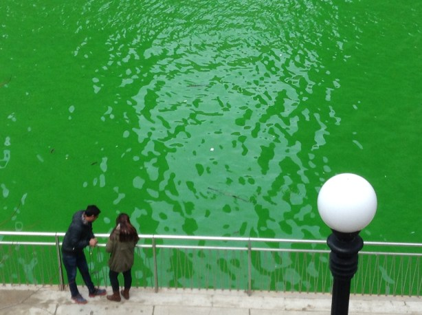 Chicago Green River for St. Patrick's Day with couple