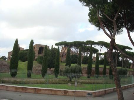 Colosseum trees