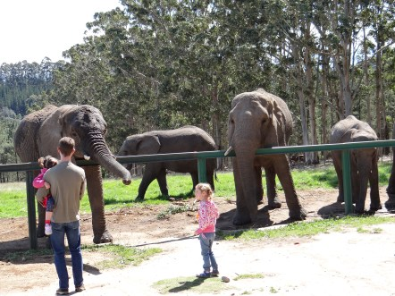 Feeding elephants at sanctuary