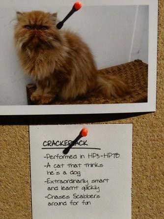 Harry Potter Stuido Tour Cat Casting