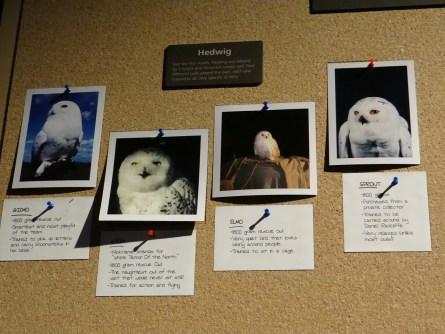 Harry Potter Studio Tour Owls