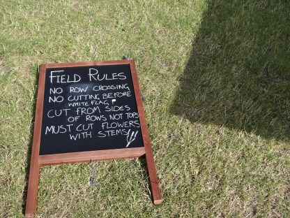 Hitchin Lavender field rules for cutting