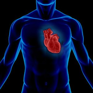 heartexposure