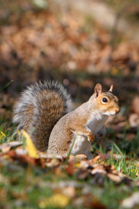 salespeople chase squirrels