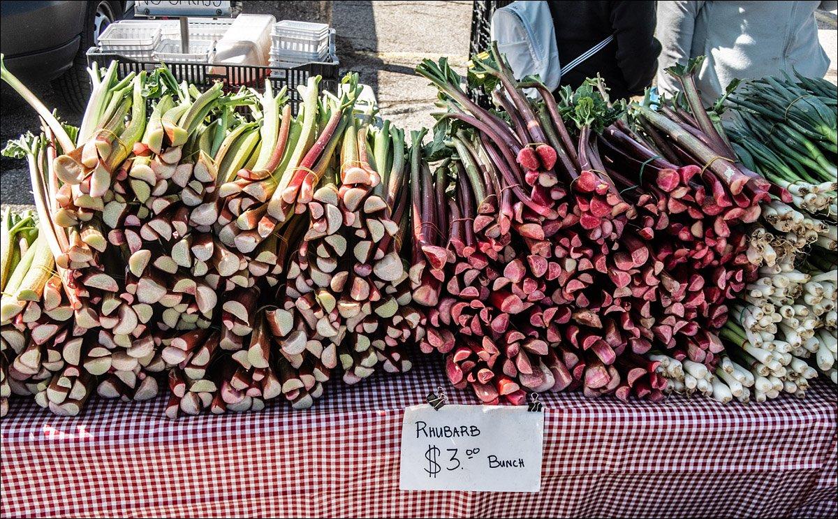 Madison Farmer's Market - Rhubarb