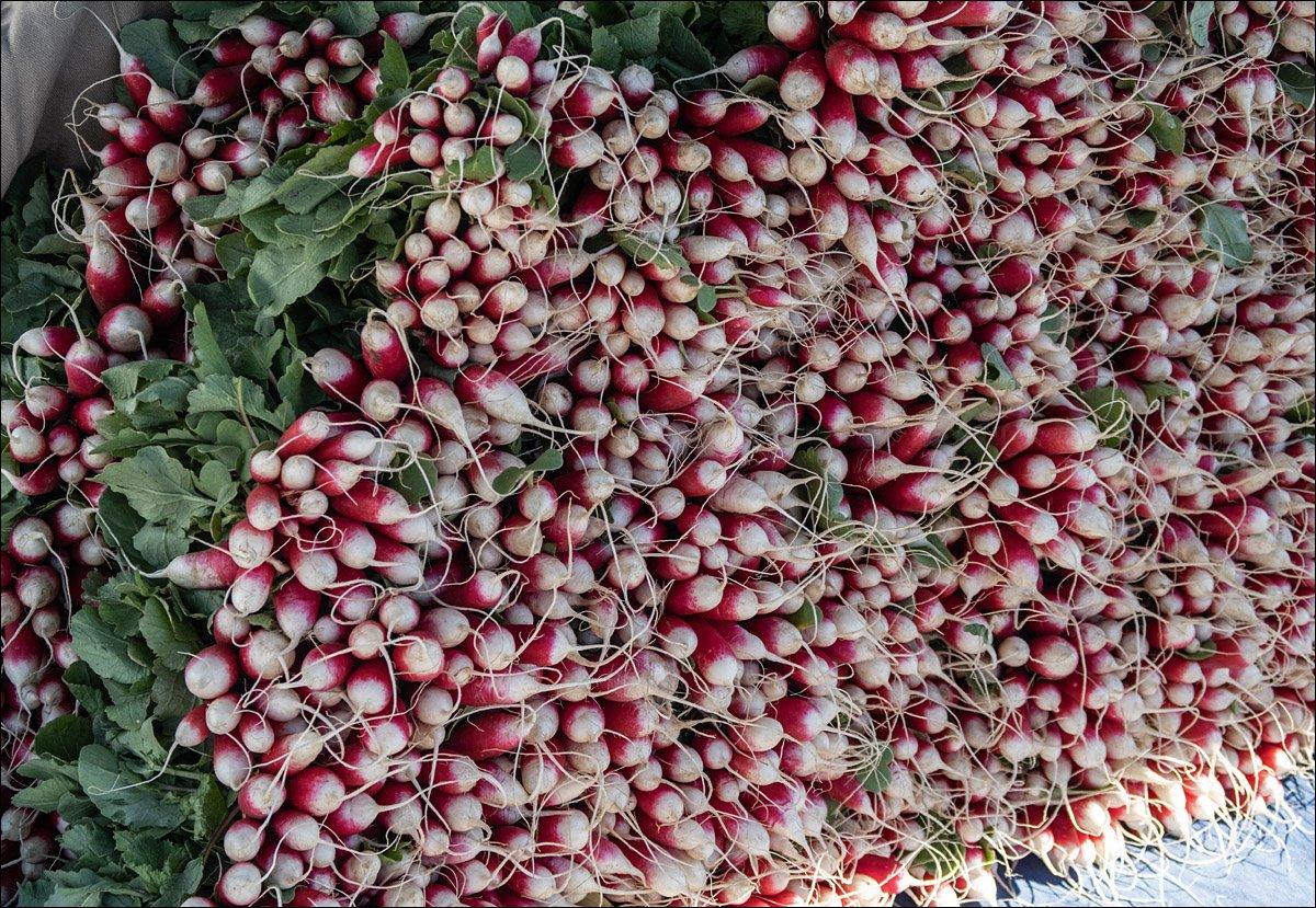 Madison Farmer's Market - Radishes