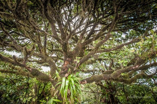 Un arbre recouvert de mousse à la Dominique