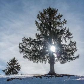 Effet de lumière à travers ce bel arbre solitaire