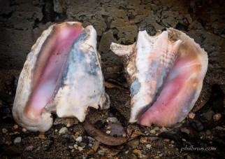 Coquillages de l'île Dominique