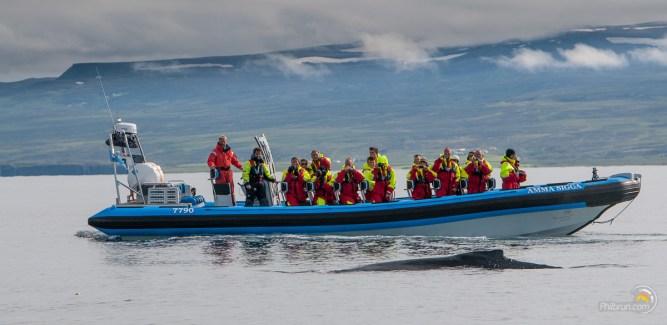 Une baleine sort très près du bateau