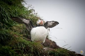 Il sèche ses ailes après la pêche