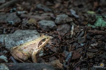 Sur le chantier une grenouille me regarde passer...