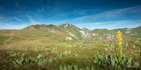 Au loin le Puy Ferrand et au fond le Puy de Sancy