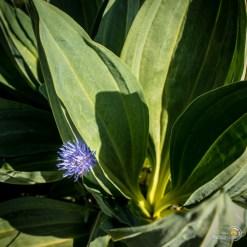 Fleur et feuilles en harmonie