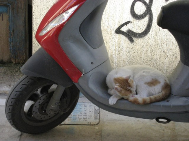 A cat on a scooter