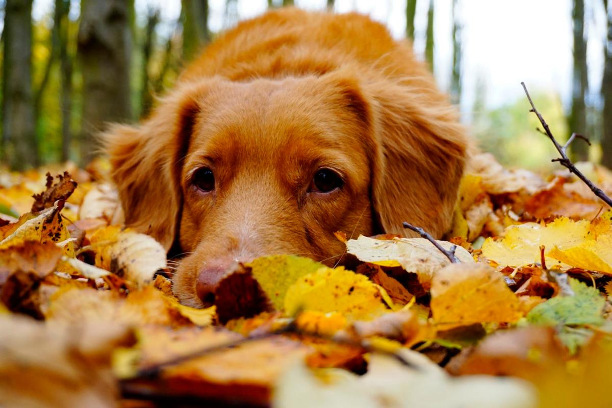 A dog in autumn leaves