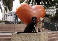 Cute Doggies in Union Square