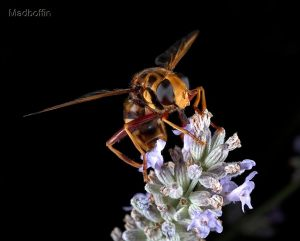 peter-mobbs-bee-3