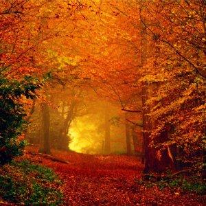 autumn-threshold