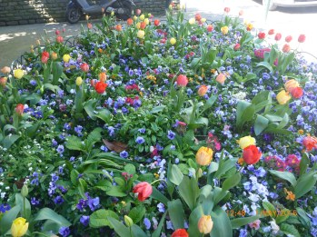 flowers-in-the-place_26654806522_o