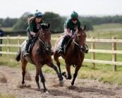niwit gallop small